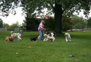 Frisbee6364